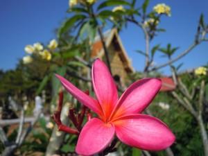 Thailand Starflower by Birgit Strauch Shiatsu Massage ThetaHealing